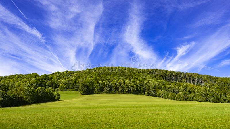 Meadow with forest and sky Panorama stock photo