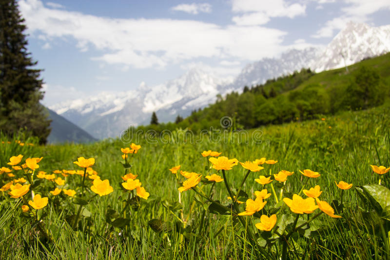 Meadow in French Alps stock photos