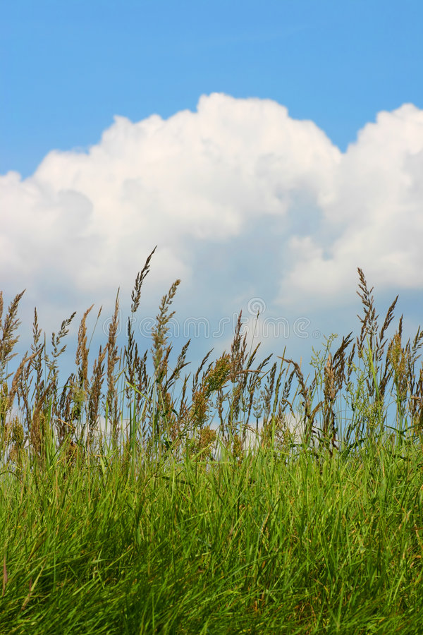 Meadow grass and a blue cloudy sky stock image