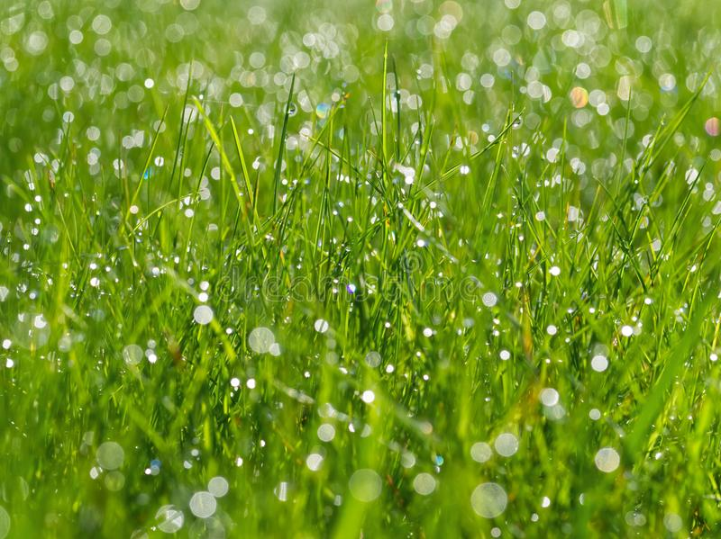 meadow grass with dew drops in sunshine, blurred background, after rain, closeup stock photos