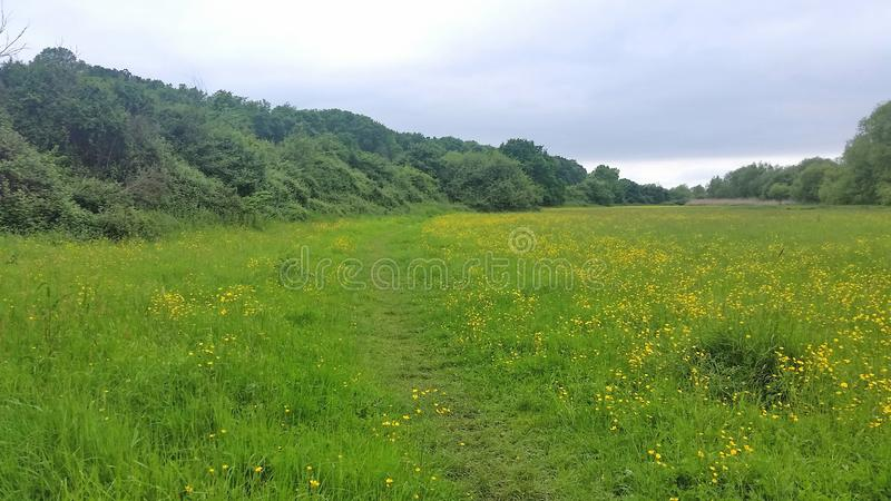 Meadow grass land in london near Heathrow airport .uk. This area of protected meadow grassland is urban green belt that protects london from getting any bigger stock photography