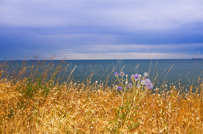 Meadow grass by the sea stock photos