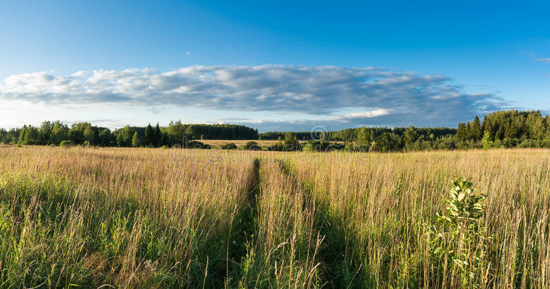 Meadow with grass and wildflowers and country road panoramic lan royalty free stock image