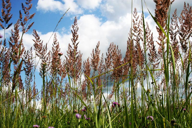 Sunny meadow with tall grasses royalty free stock photography