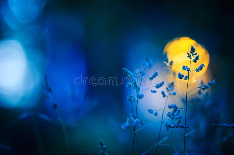 Meadow grasses in summer night. Defocused window light in the background stock image