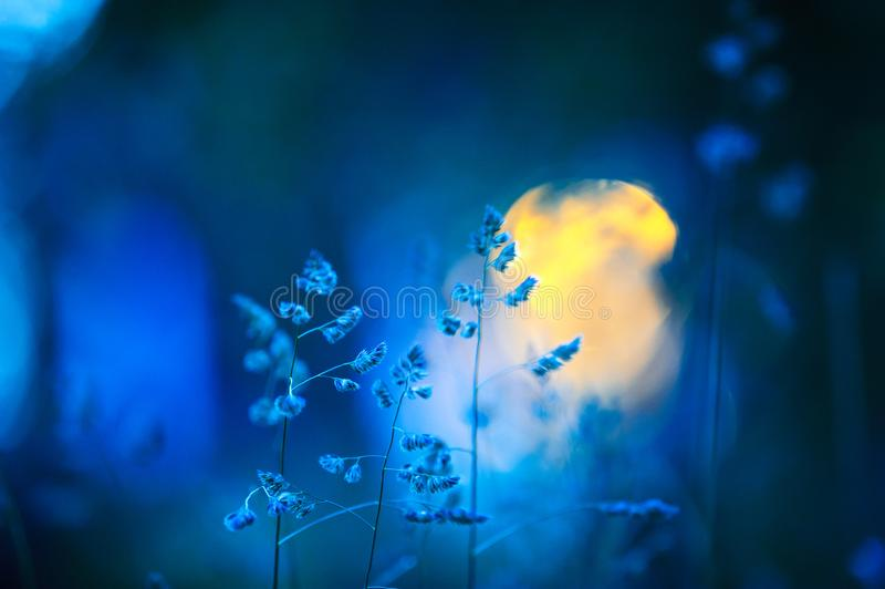 Meadow grasses in summer night. Defocused window light in the background royalty free stock image