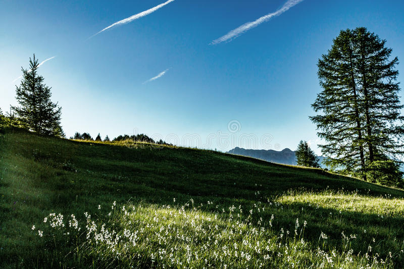 Meadow of grasses on sunny day royalty free stock photo