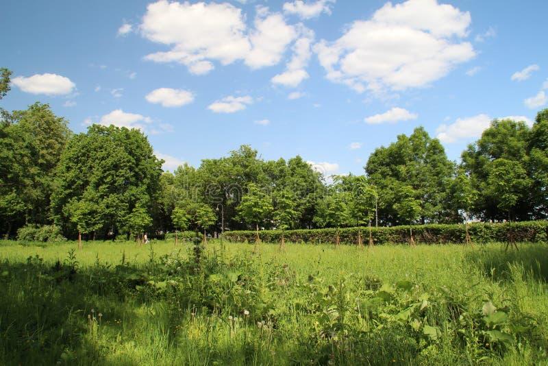 The meadow stock photos