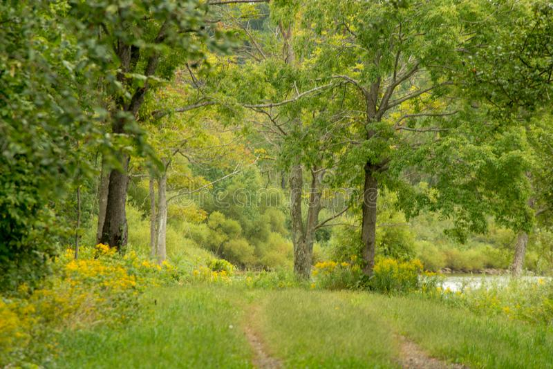 Meadow on the hiking trail. Near Howard Eaton reservoir in Northwestern Pennsylvania in late summer Soft focus creates a watercolor feeling royalty free stock images