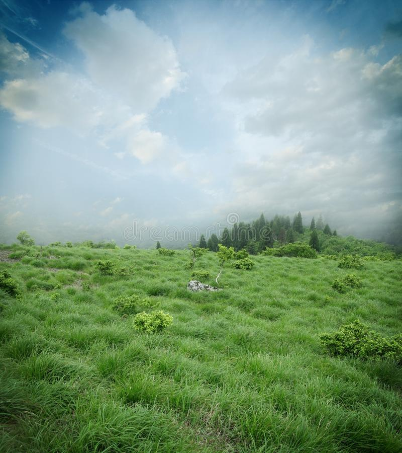 Meadow Image Royalty Free Stock Image