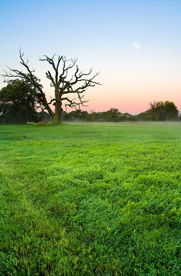 meadow kolorowa zdjęcie royalty free