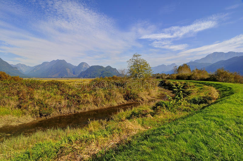 Meadow landscape stock photography