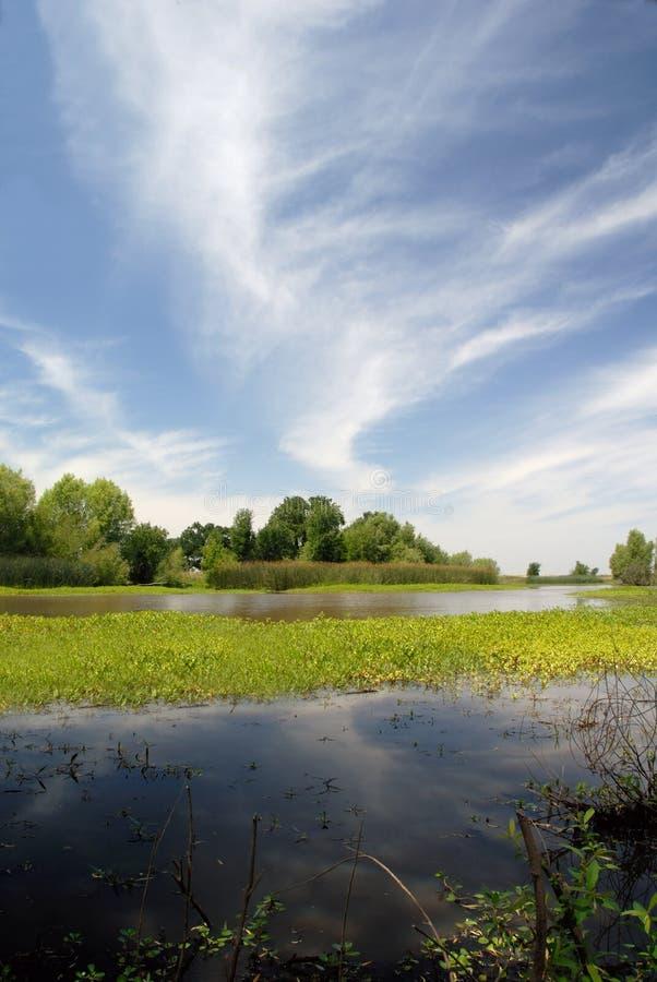 meadow lato obrazy stock
