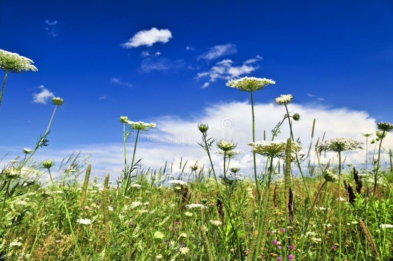 meadow lato fotografia stock