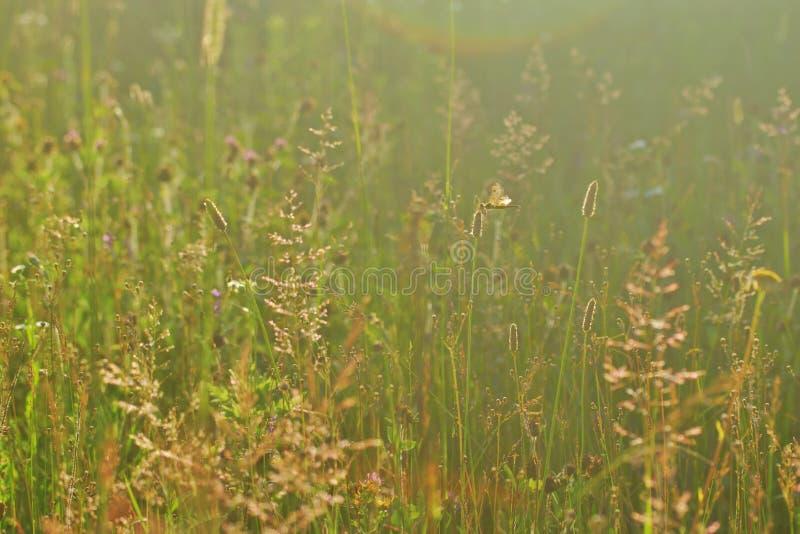 meadow lato dziki zdjęcie royalty free