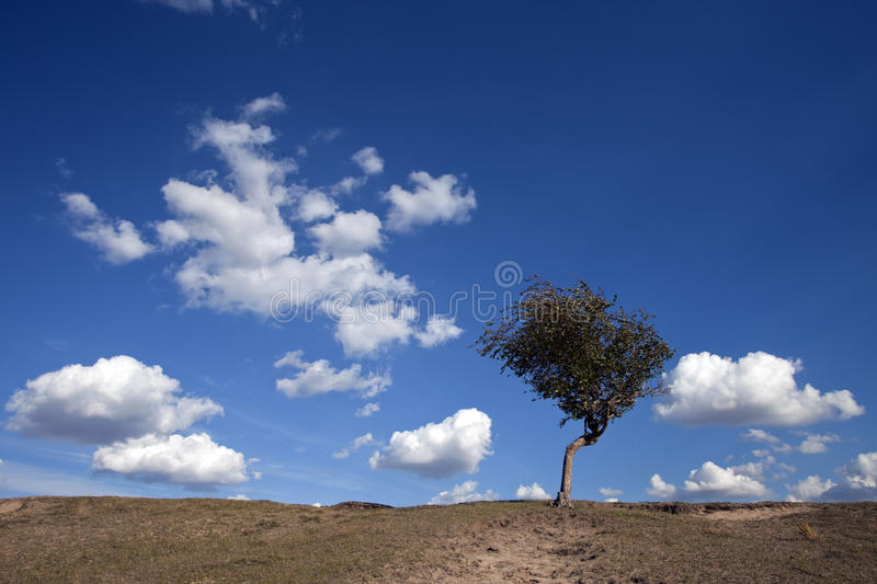 Download Meadow meets sky stock photo. Image of backgrounds, freedom - 21664252