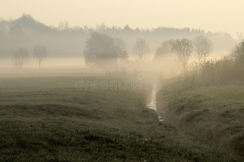 Download Meadow In Morning Mist Stock Photography - Image: 19406922