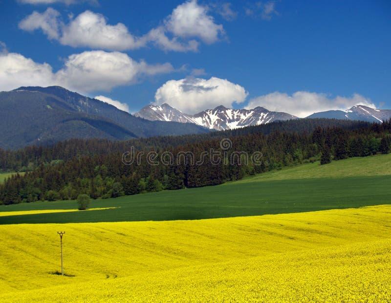 Meadow & Mountain. Yellow meadow and mountain located in Liptov region, Slovakia royalty free stock photos