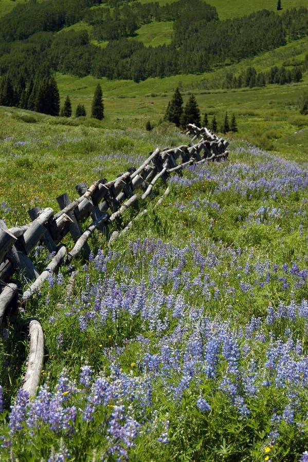 Meadow mountain fence stock photo