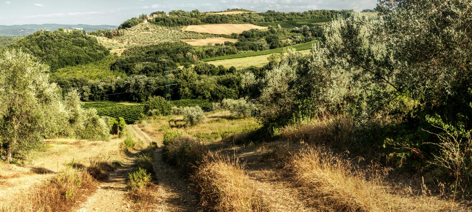 Dirt track in the Tuscan countryside. A meadow between olive groves shows the ruts of occasional farm vehicles lit in the sunrise royalty free stock photography