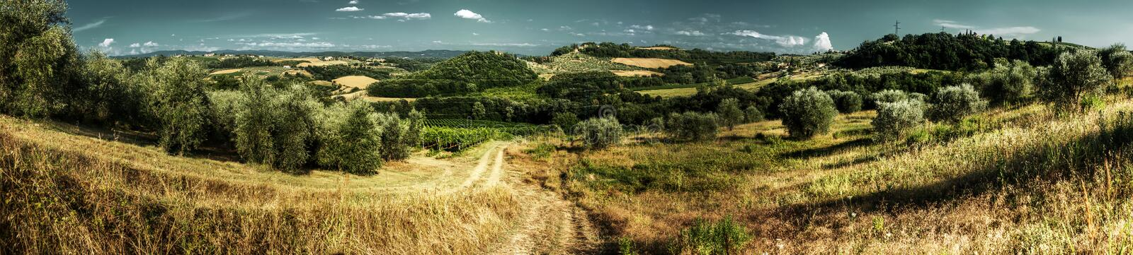 Dirt track in the Tuscan countryside. A meadow between olive groves shows the ruts of occasional farm vehicles lit in the sunrise royalty free stock photo