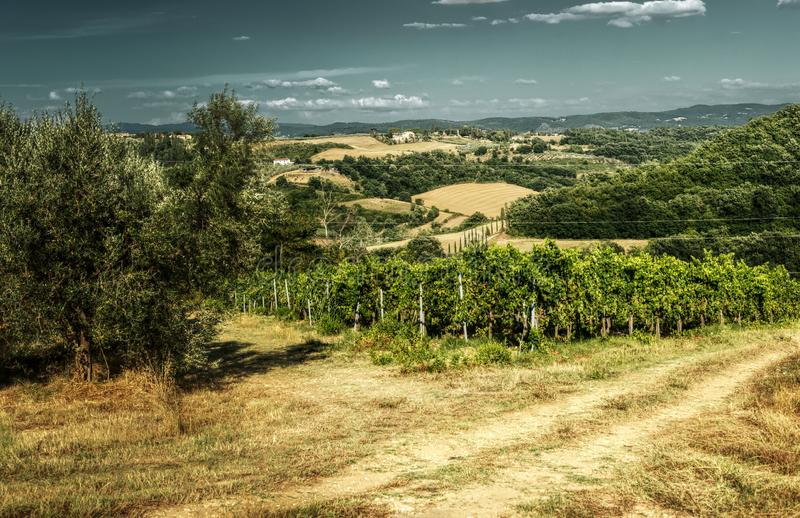 Vineyard and track in the Tuscan countryside. A meadow between olive groves and vines shows the ruts of occasional farm vehicles lit in the sunrise royalty free stock images