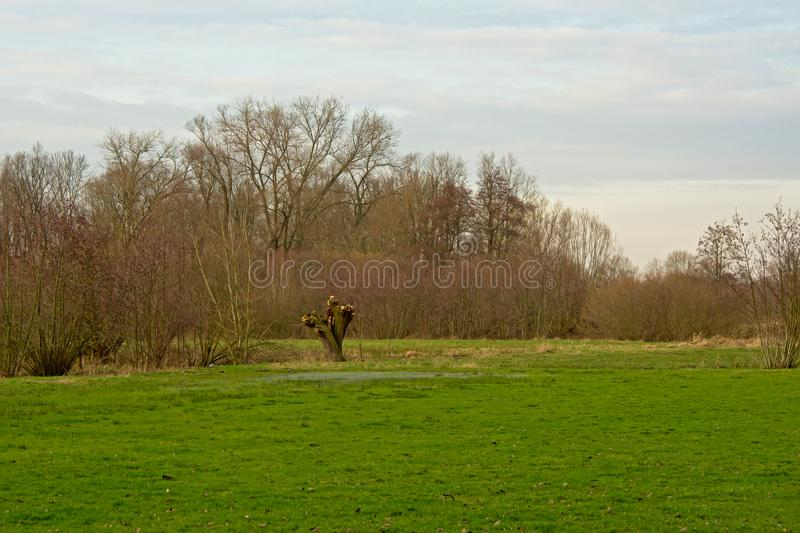 Meadow with pollarded willow and othehr bare trees stock photos