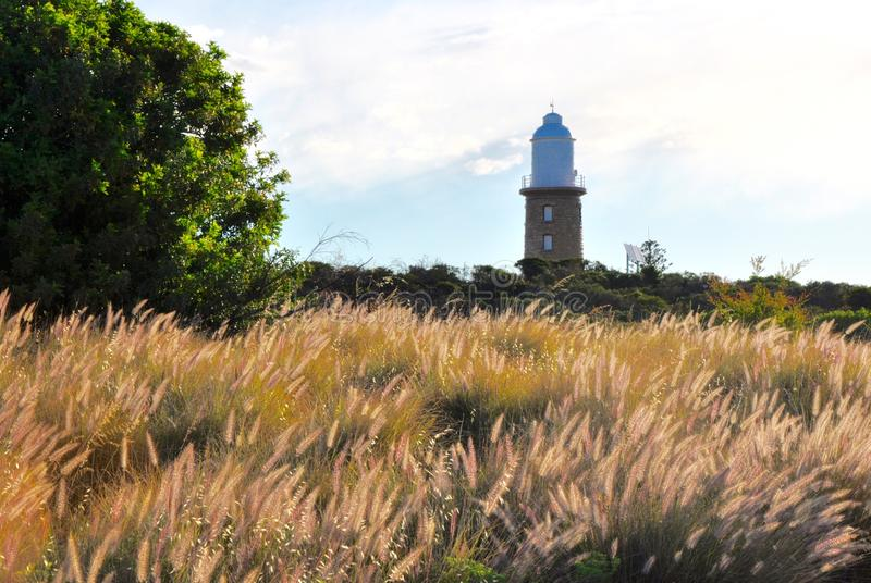 Meadow of Purple Grasses with Lighthouse, Western Australia stock images