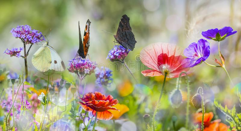 Meadow with red poppies and butterflies stock image