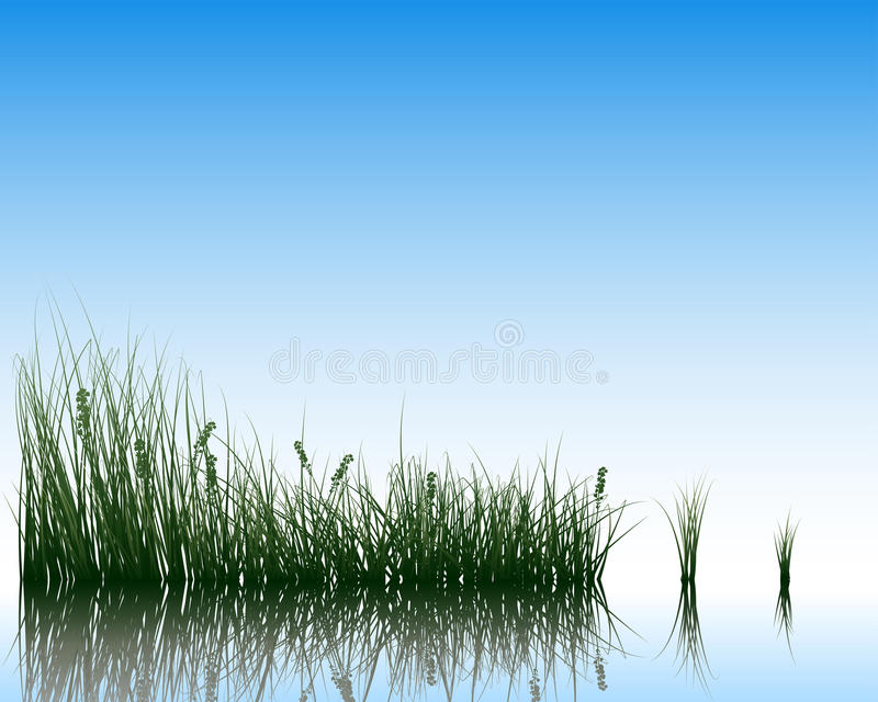 Meadow With Reflection Stock Images