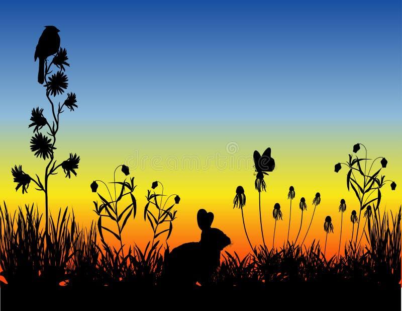 meadow słońca