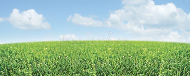 Download Meadow Scene Stock Photo - Image: 8601730