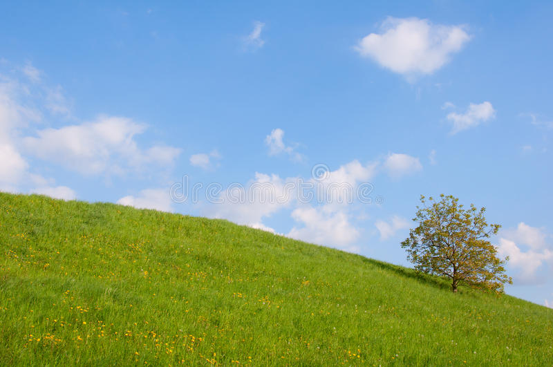 Download Meadow With Single Tree Royalty Free Stock Photography - Image: 19352977