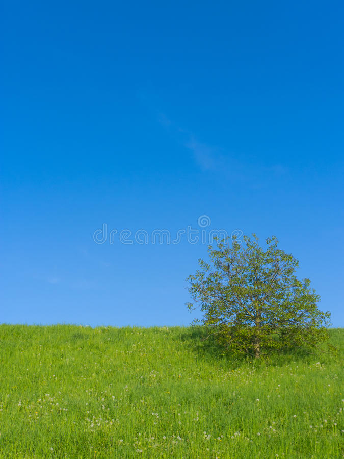 Download Meadow with Single Tree stock image. Image of nature - 19411861