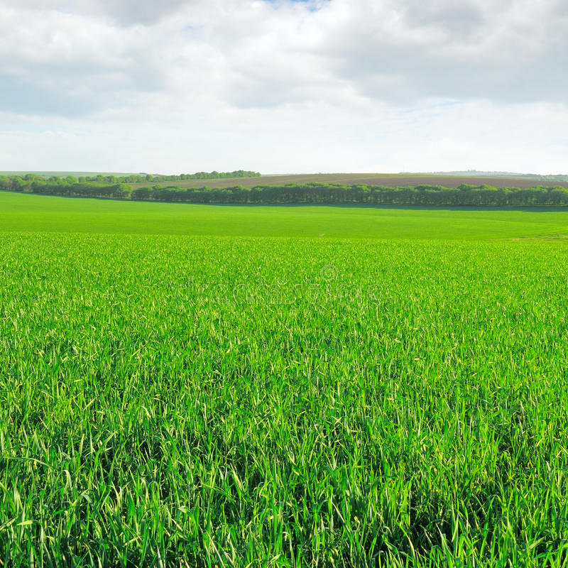 Download Meadow and  sky stock photo. Image of meadow, lawn, blue - 27063424