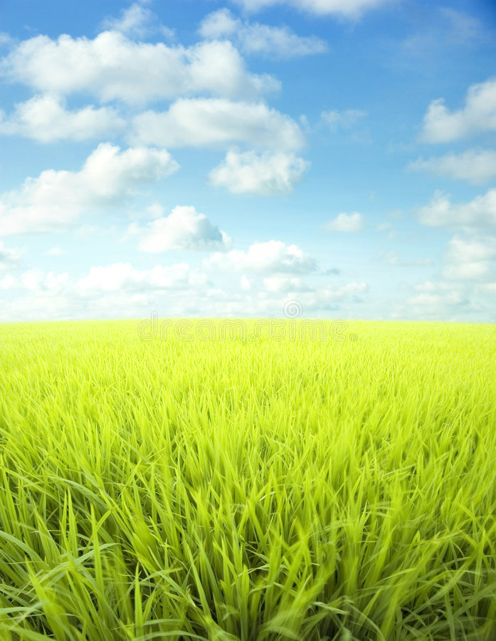 Download Meadow and sky stock photo. Image of food, grass, environment - 4807738