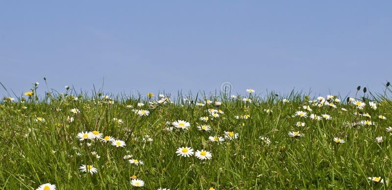 Meadow sky