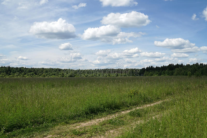 Meadow. Sky blue green trees nature sunlight landscape royalty free stock image
