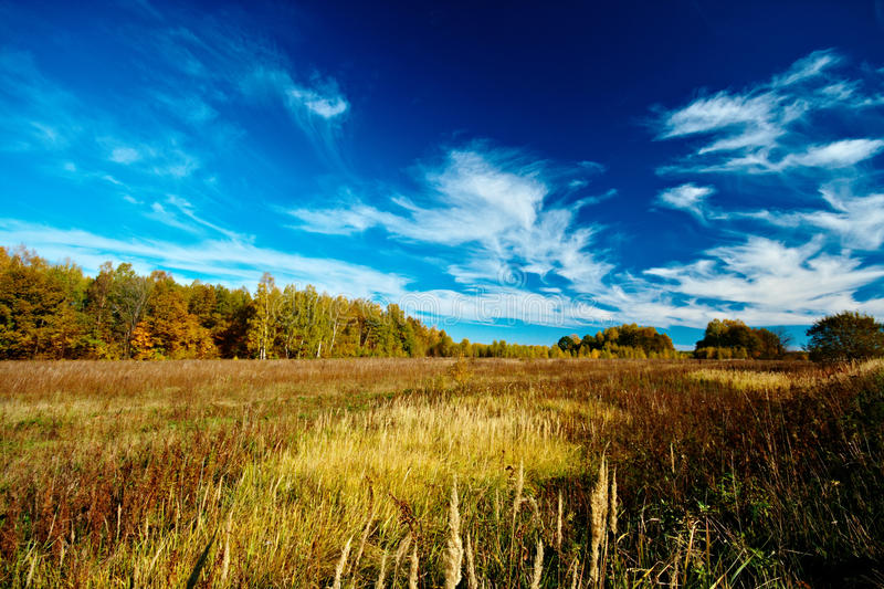Download Meadow Sky And Trees Royalty Free Stock Image - Image: 16585776