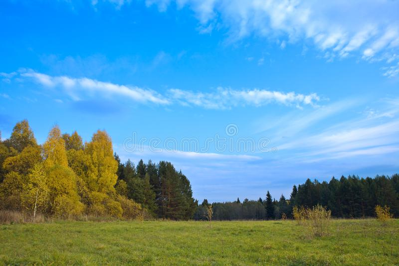 Meadow in solar autumn day royalty free stock photos