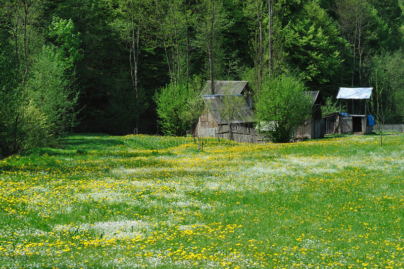 Download Meadow in spring stock image. Image of quiet, grass, landscape - 23311239
