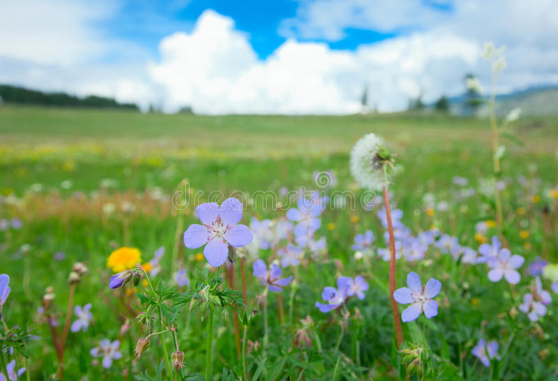 Meadow on a summer day royalty free stock photo