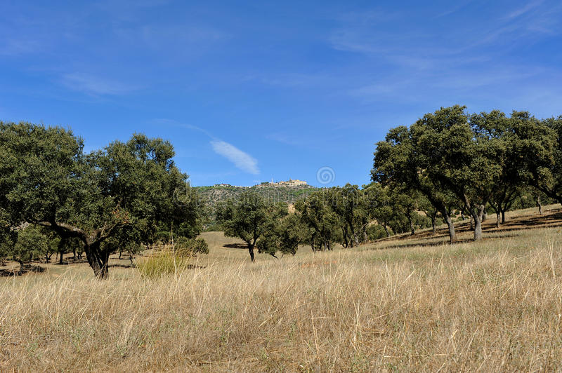 Meadow at summer, Sierra de Andujar Natural Park in Jaen province, Spain. Overview of the Sierra de Andujar Natural Park located northwest of the province of Ja royalty free stock images
