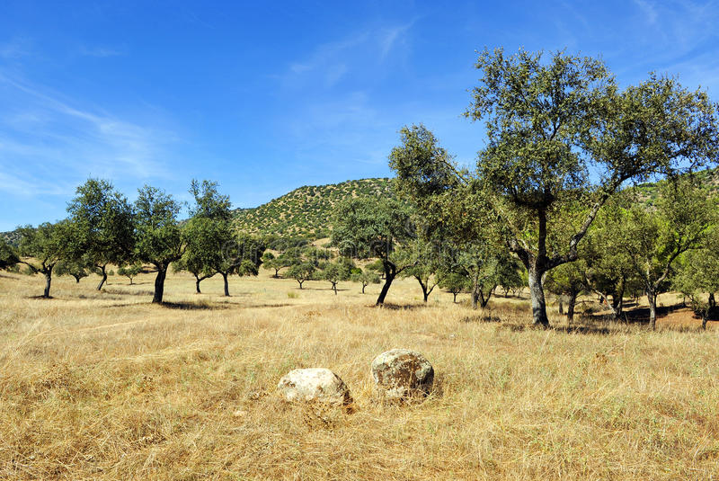Meadow at summer, Sierra de Andujar Natural Park in Jaen province, Spain. Panoramic of the Sierra de Andujar Natural Park located to the northwest of the stock photos