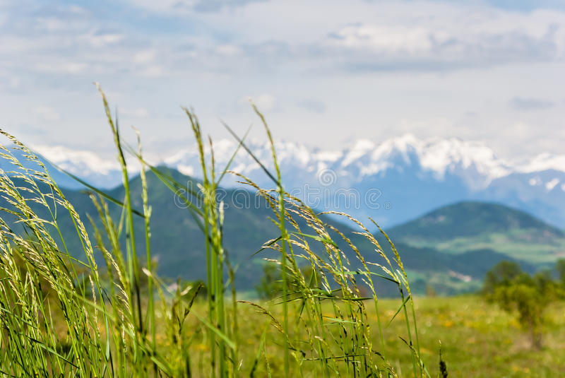 Meadow in summer royalty free stock images