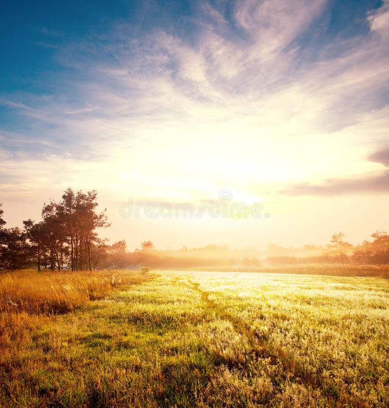 Meadow on sunrise stock photography
