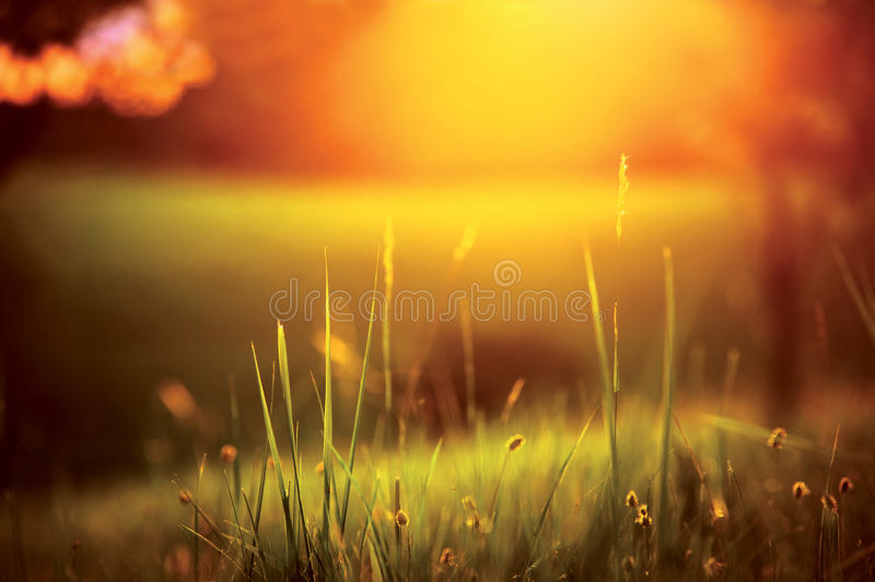 Meadow during sunset 2 royalty free stock photos