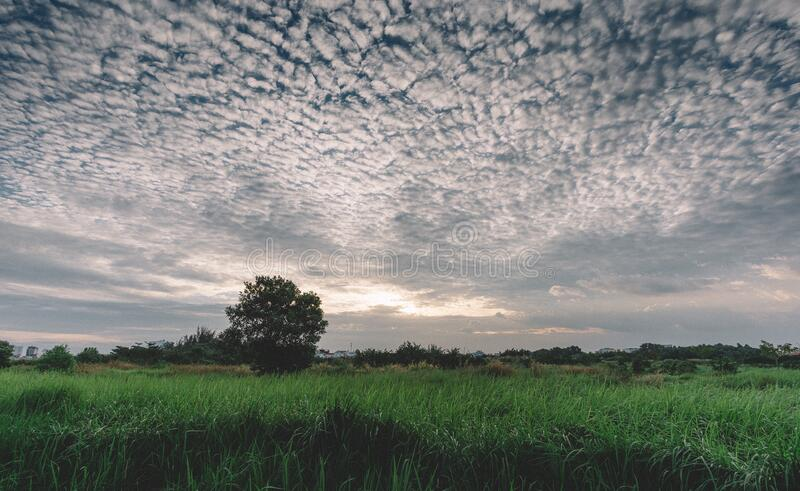 Meadow at sunset royalty free stock image