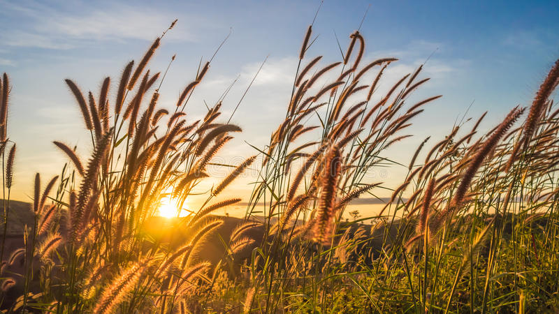Meadow with sunset in Thailand. royalty free stock photo