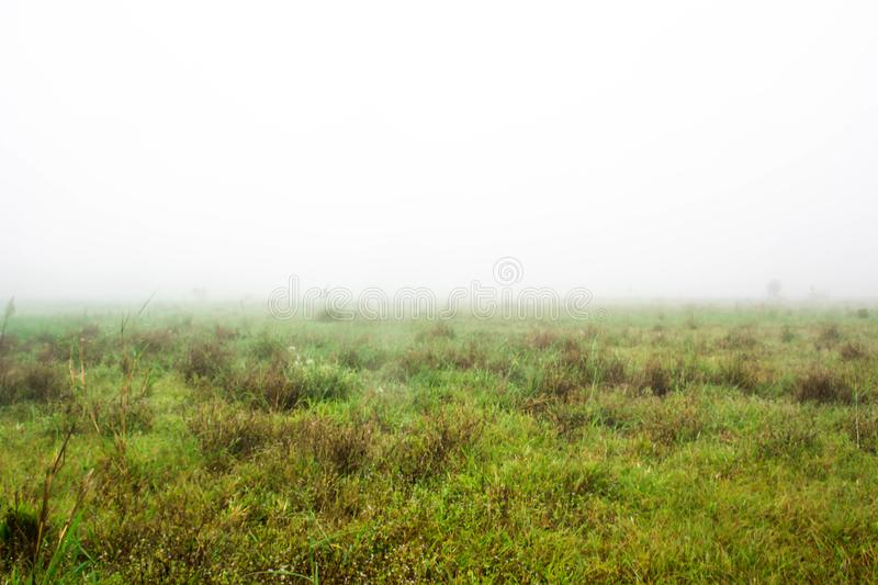 Meadow and thick mist. royalty free stock image
